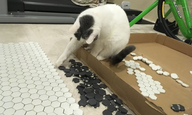 feline assistance